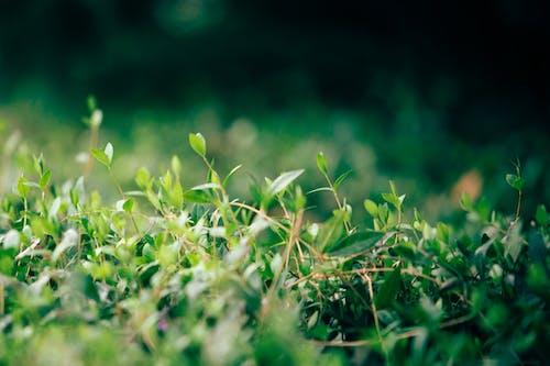 Foto stok gratis Daun-daun, dedaunan, hijau