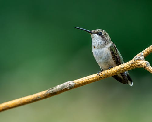 Hummingbird sitting on tree twig in nature