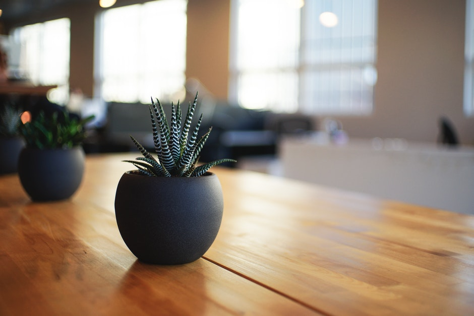 Green and White Stripe Plant in Black Plant Pot on Brown Table
