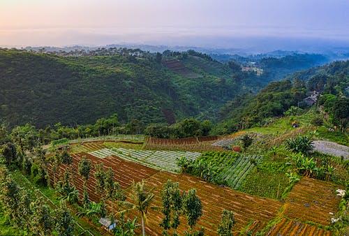 Farmland in a Mountain