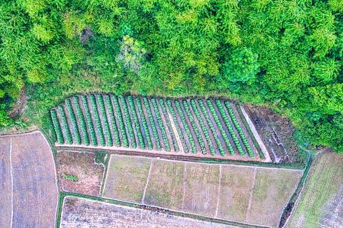 Foto stok gratis agrikultura, alam, bidang