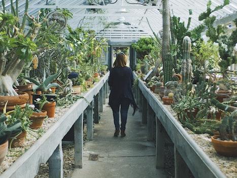 Woman in Black Cardigan Walking Between Cactus Plant