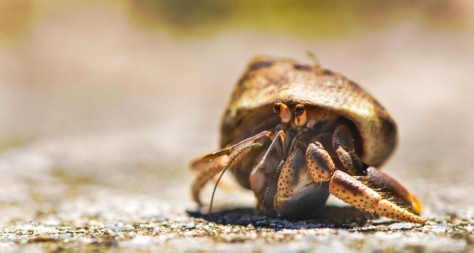 animal, beach, close-up view