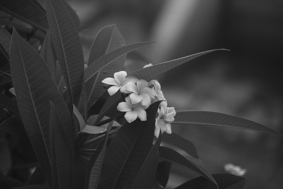 Grayscale Photo of White Petaled Flower