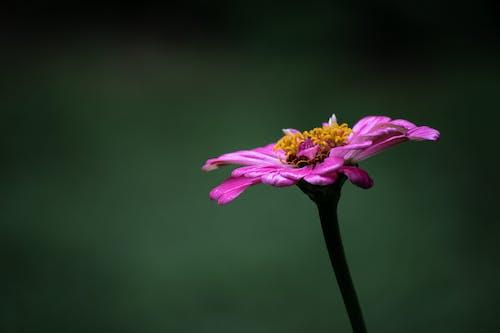Macro Shot of a Flower