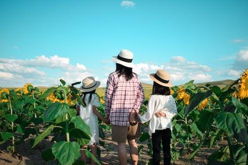 キッズ, ひまわり, ひまわり畑の無料の写真素材