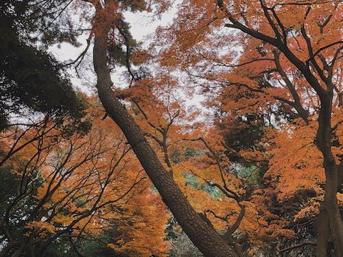 Trees with Orange Leaves