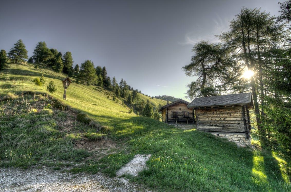 alba, alberi, azienda agricola