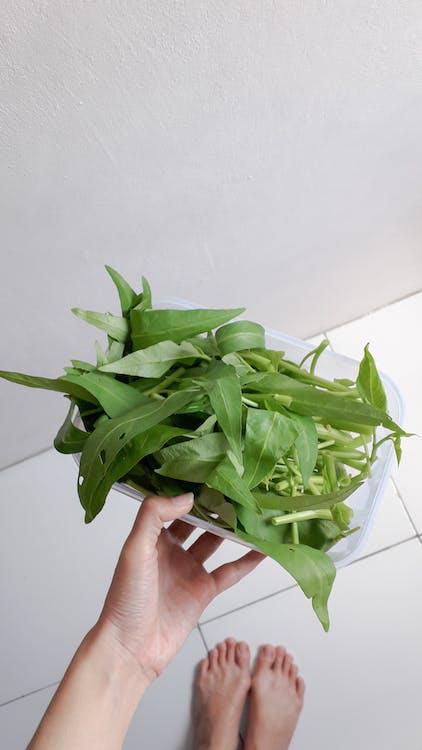 Foto stok gratis bahan, daun, flora