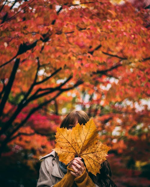 Person Holding a Dry Leaf