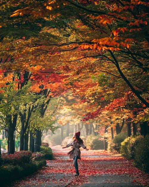 Woman in Black Jacket Walking on Pathway Between Trees