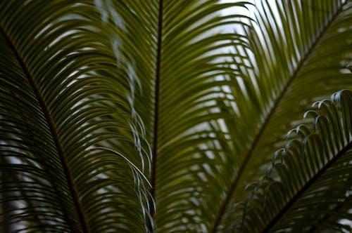 Kostenloses Stock Foto zu blätter, grün, palmenblätter