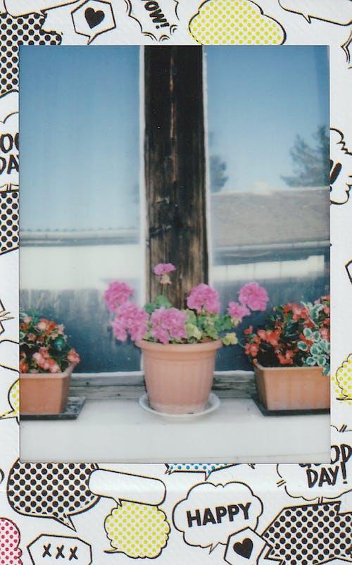 Ilmainen kuvapankkikuva tunnisteilla elokuva-valokuvaus, elokuvan kuva, heijastus, ikkuna
