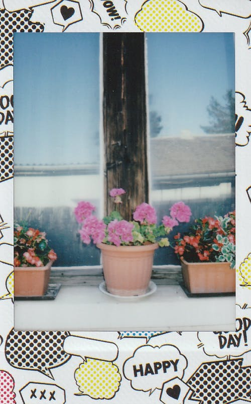 Fotos de stock gratuitas de al aire libre, alféizar, flor, flor rosa