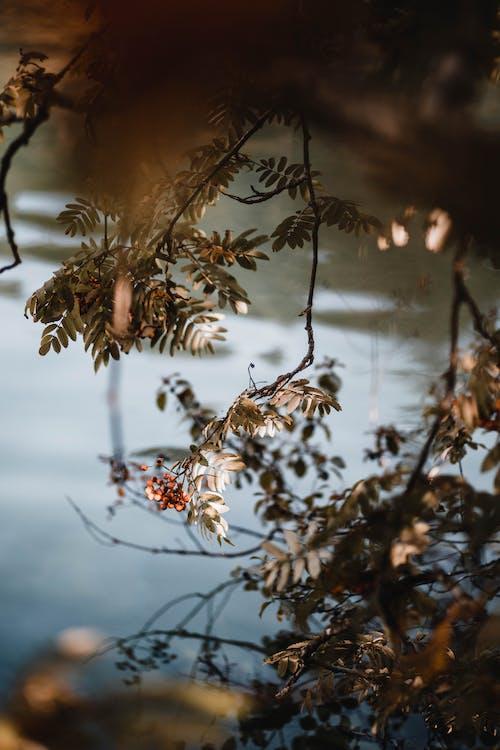 Brown and White Flowers in Tilt Shift Lens