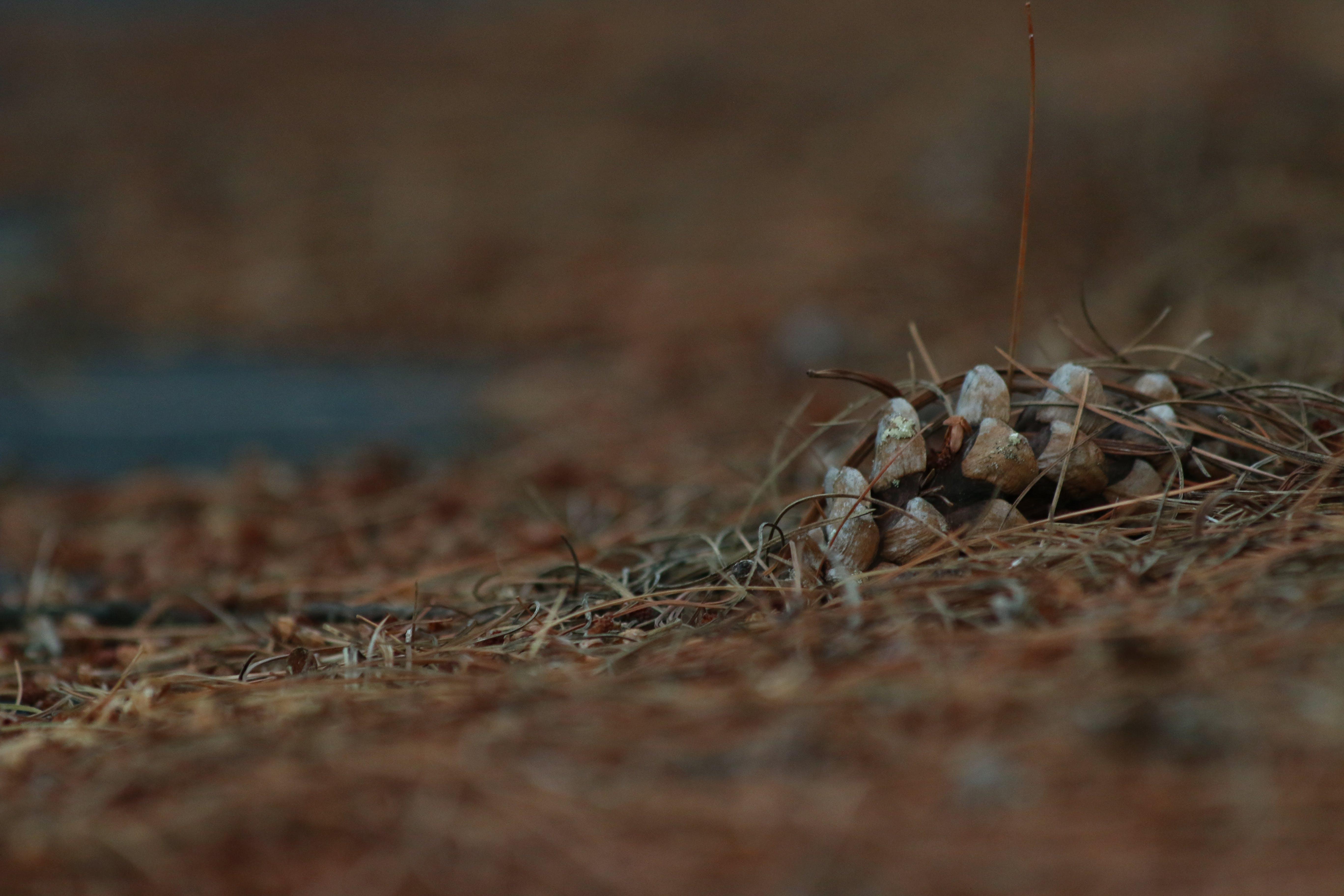 대자연, 소나무, 솔방울, 온타리오 주의 무료 스톡 사진