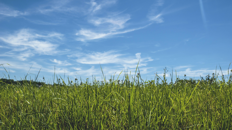 blue skies, clouds, field
