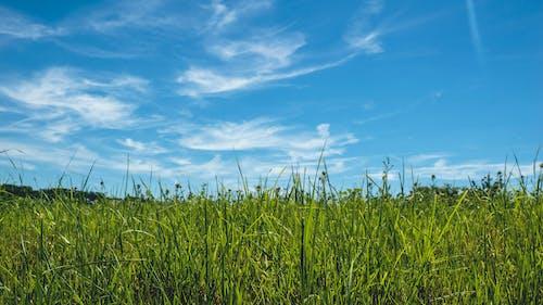 Δωρεάν στοκ φωτογραφιών με γήπεδο, γρασίδι, λιβάδι με χόρτα, μπλε ουρανοί