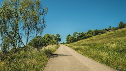 Darmowe zdjęcie z galerii z błękitne niebo, czyste niebo, droga, drzewa