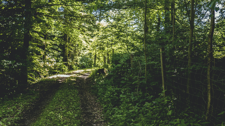 Kostenloses Stock Foto zu bäume, beratung, dschungel, feldweg