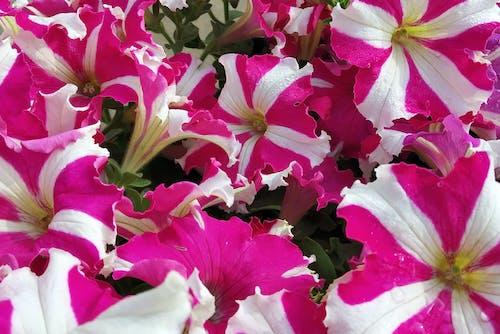 Free stock photo of balcony garden, blossom, flower image