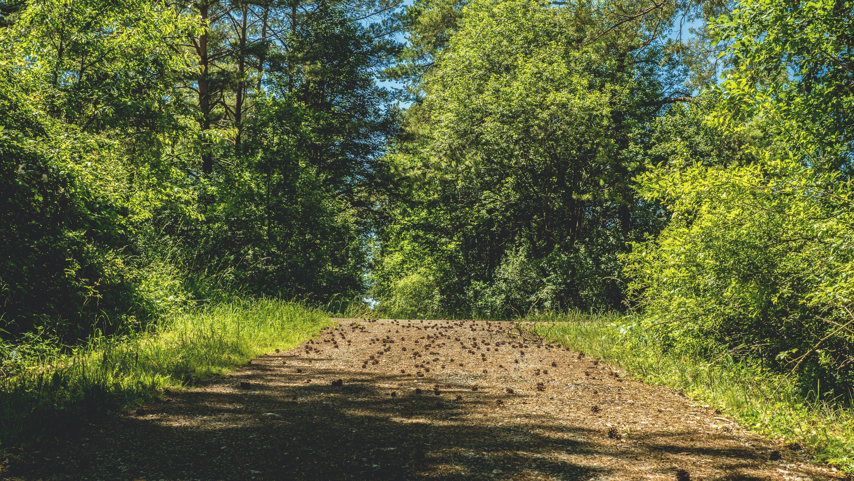 Fotobanka sbezplatnými fotkami na tému idylický, lesy, malebný, park