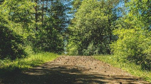 Darmowe zdjęcie z galerii z cichy, drzewa, idylliczny, las