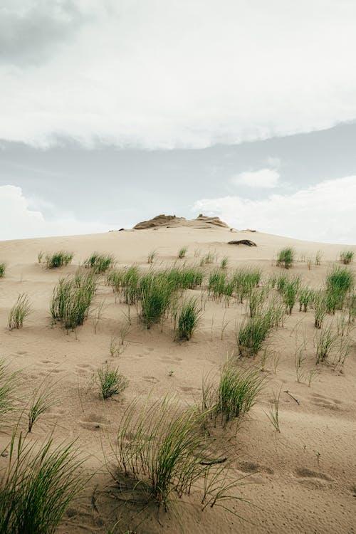 Ảnh lưu trữ miễn phí về bờ biển, cát, cồn cát, đất hoang