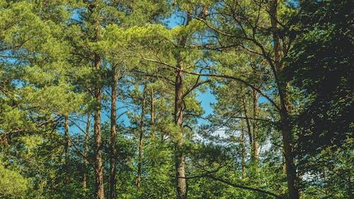 Gratis lagerfoto af dagslys, grene, løv, miljø