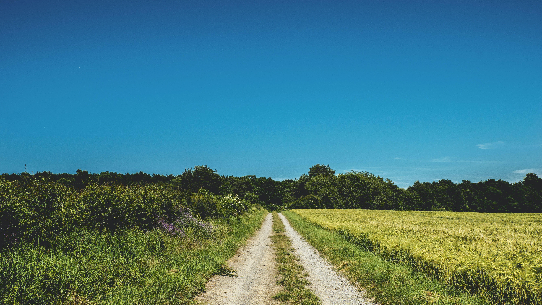 Road in Between of Grasslands