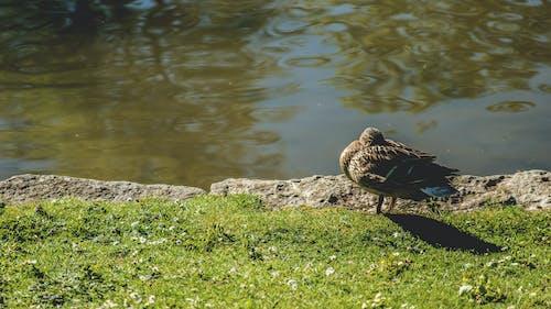 Brown Bird Near Body of Water