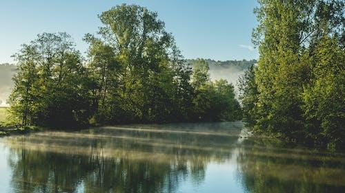 คลังภาพถ่ายฟรี ของ กลางวัน, การสะท้อน, งดงาม, ต้นไม้