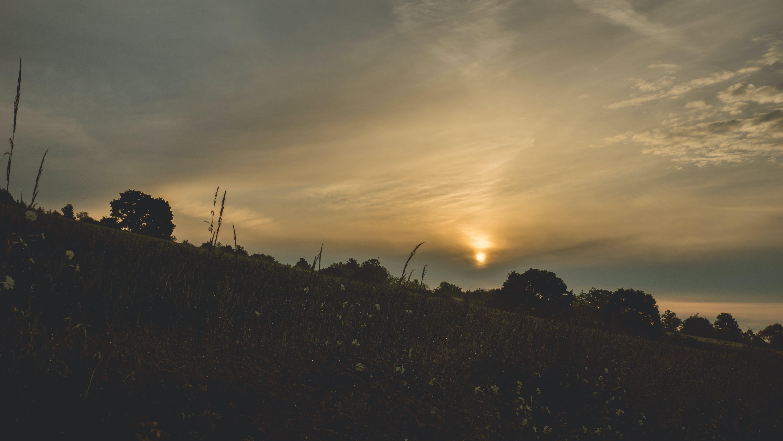 Silhouette of Trees Against Sunlight
