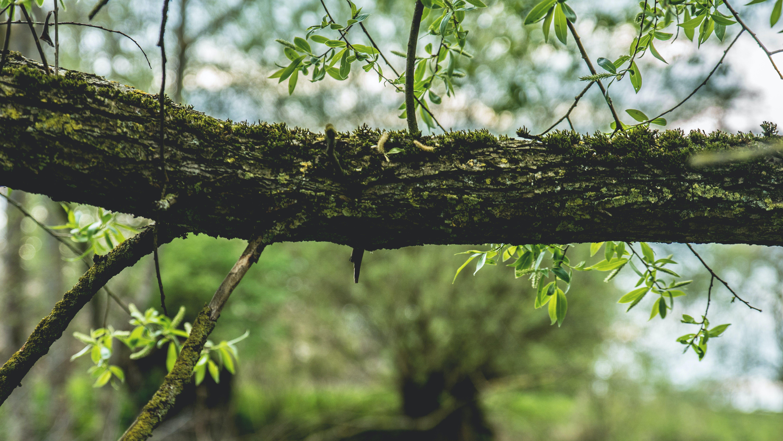 Безкоштовне стокове фото на тему «великий план, гілки, кора дерева, ліс»