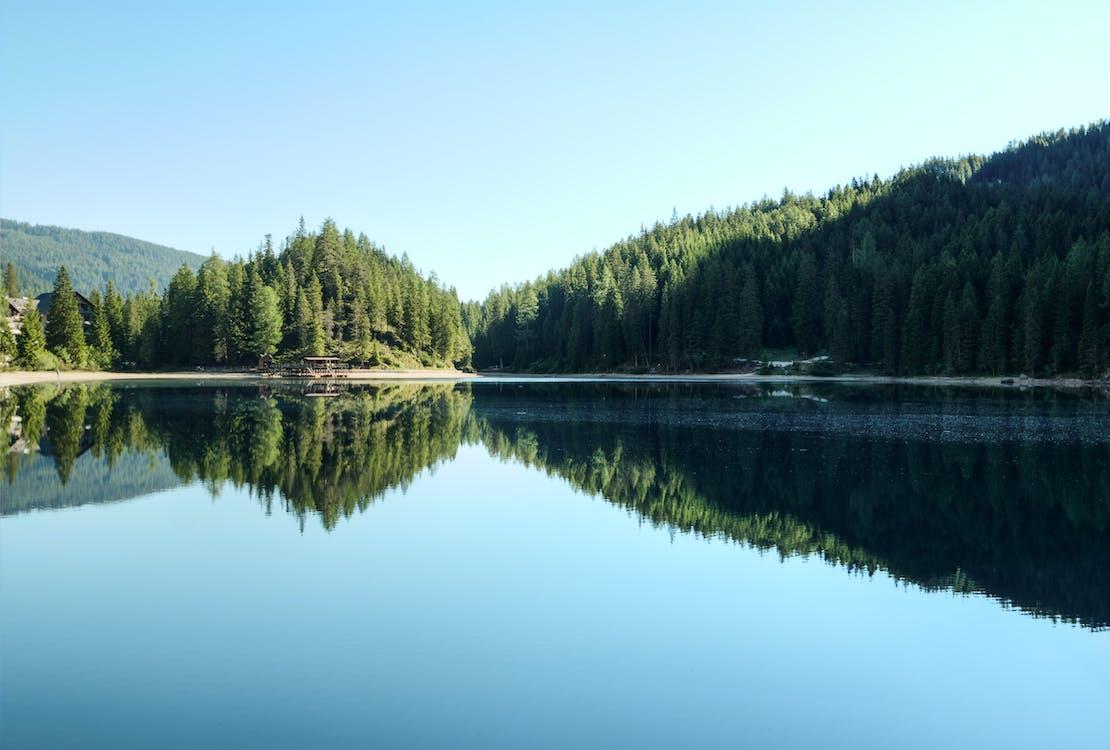 aigua, alt, arbres