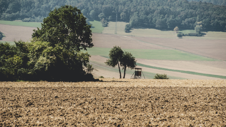 Foto stok gratis alam, berkabut, bidang, hutan