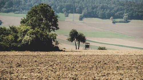 フィールド, 土壌, 木, 森の中の無料の写真素材