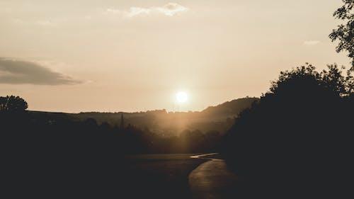 คลังภาพถ่ายฟรี ของ ซิลูเอตต์, ซีเปีย, ดวงอาทิตย์, ต้นไม้