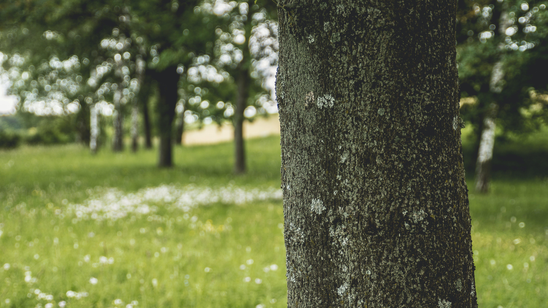 Tree Trunk Photo