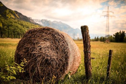 Free stock photo of wood, landscape, nature, sunset