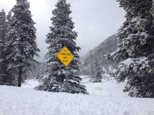 คลังภาพถ่ายฟรี ของ ต้นไม้, สัญญาณ, หิมะ, เป็นน้ำแข็ง