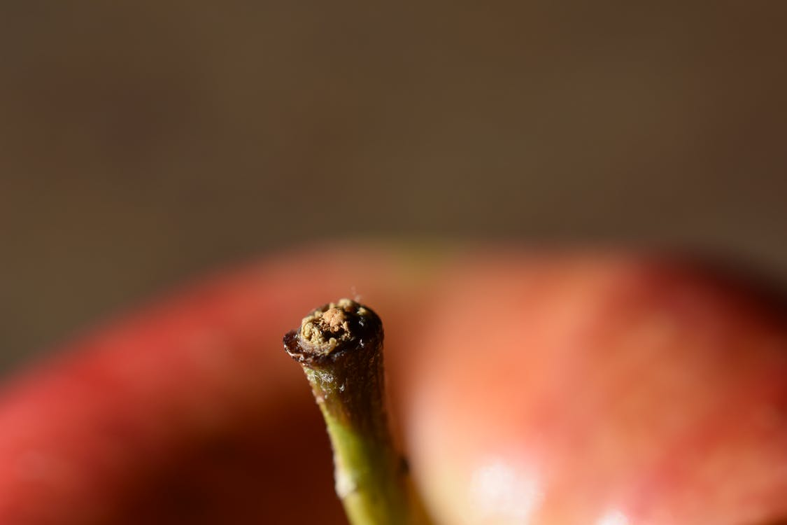 Free stock photo of apple, Apple Stem, fruit