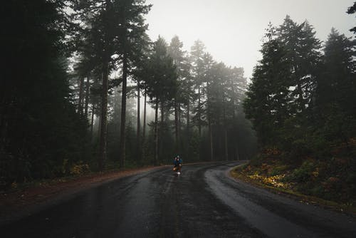 Anonymous tourist on road among forest on misty day