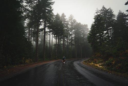 Foto profissional grátis de ao ar livre, árvore, asfalto