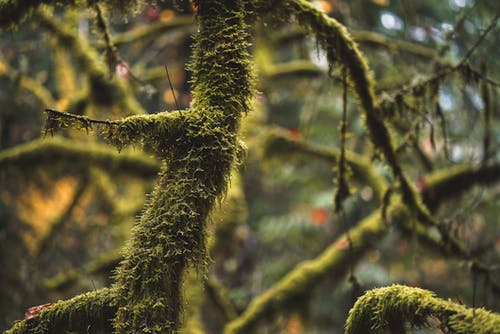 Tree covered with moss in autumn forest