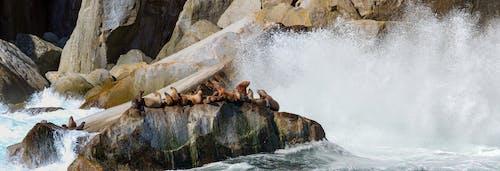 Free stock photo of alaska, baby seals, crashing waves, Resurection Bay