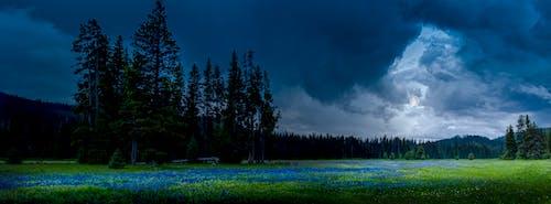 Free stock photo of camus flowers, camus meadow, full moon, Idaho Montana border