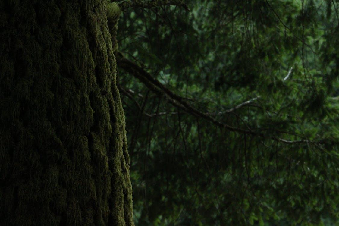 トランク, 常緑樹, 日光