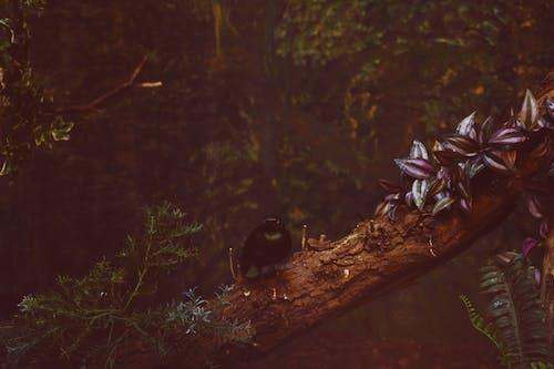 ağaç gövdesi, ağaçlar, bitkiler, bulanıklık içeren Ücretsiz stok fotoğraf
