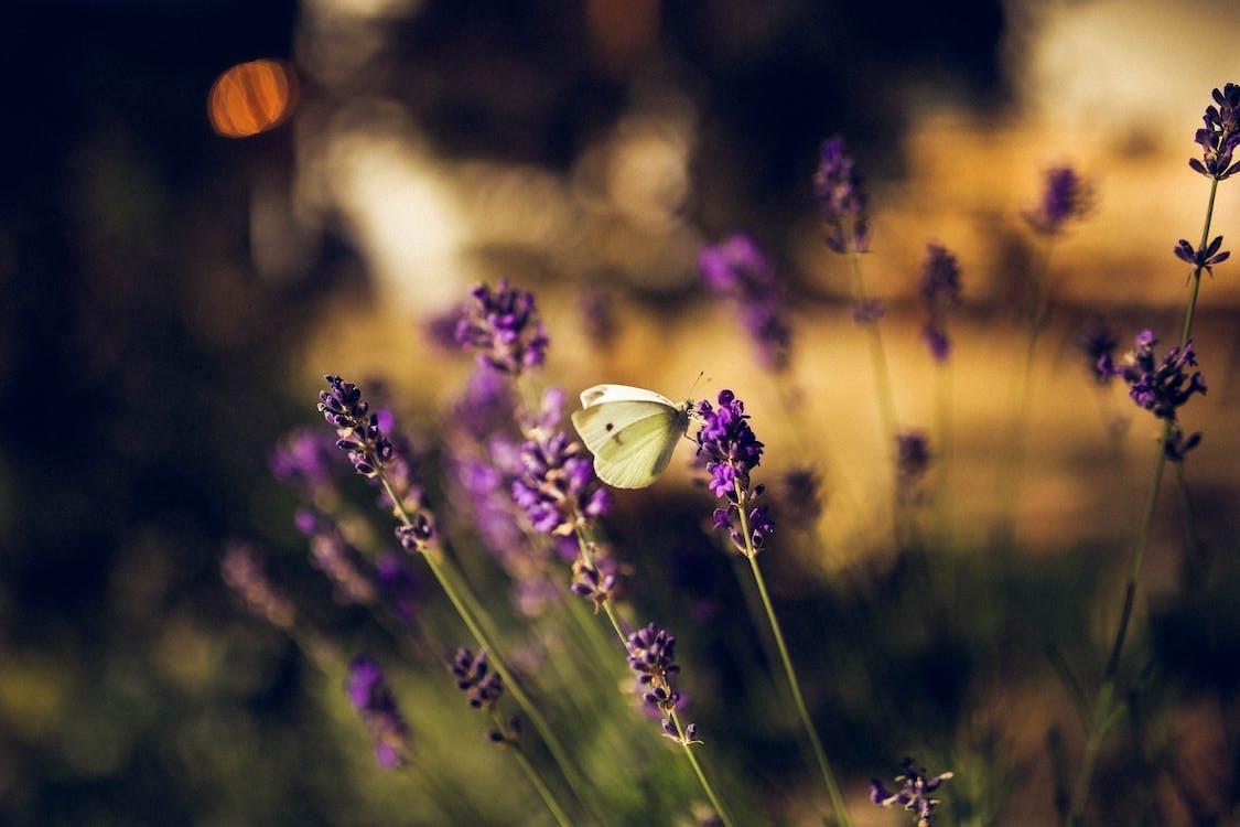 a base di erbe, bellissimo, bocciolo